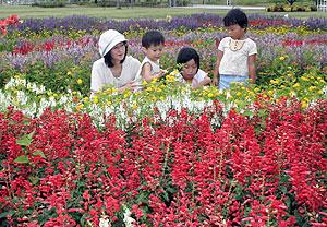 色とりどりの花が咲き誇る花壇=江南市小杁町のフラワーパーク江南で
