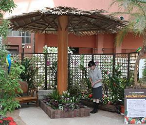 トロピカルフラワーがテーマの「四季の花まつり」=砺波市のチューリップ四季彩館で