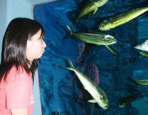 登場した黄金色のシイラに子どもらは興味津々=静岡市清水区の東海大海洋科学博物館で