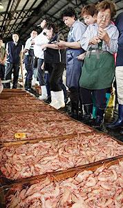 水揚げされたヒゲナガエビ=尾鷲市の尾鷲魚市場で