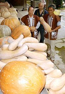サミットに出品されたカボチャ=幡豆町のハズ観音妙善寺で