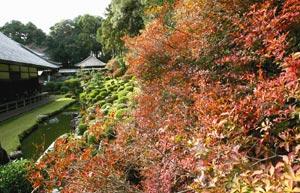 モミジやドウダンツツジの葉が赤く色づき始めた龍潭寺の庭園=10日、浜松市北区引佐町井伊谷で(斉藤直純撮影)