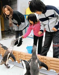 ペンギンのくちばしに餌を渡す子どもたち=志摩マリンランドで