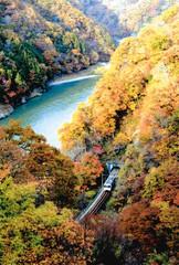 天竜川沿い、紅葉のトンネルを抜けるJR飯田線の電車=泰阜村で
