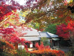 紅葉が見ごろになった森鴎外・夏目漱石邸の周辺=犬山市の明治村で