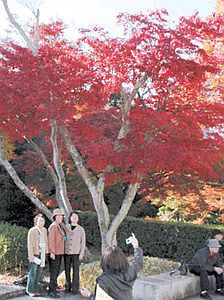 神宮徴古館前で紅葉を楽しむ人たち