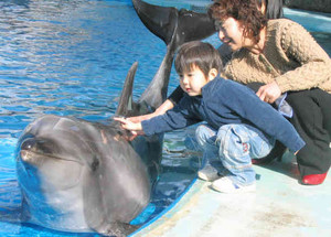バンドウイルカの背中に触る子どもら=名古屋港水族館で