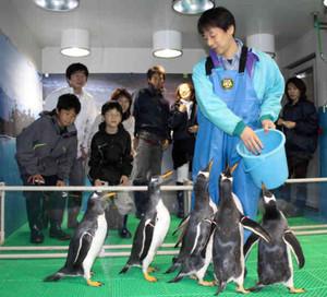 間近に見られるペンギンに「かわいい!」と歓声。30日から一緒に写真撮影ができる=名古屋市港区港町の名古屋港水族館で