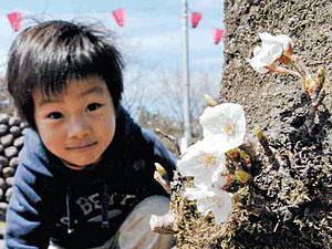 「小さい桜咲いてる」。木の根元の幹から咲いた桜の花を見つけた=魚津市の魚津総合公園で