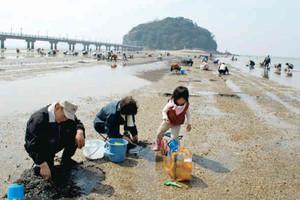 潮干狩りを楽しむ家族連れら=蒲郡市の竹島海岸で