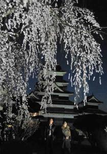 見ごろになった桜がライトアップされ、幽玄な雰囲気の本丸庭園=国宝松本城で