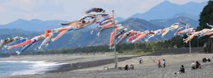 潮風を受けてなびくこいのぼり=熊野市の七里御浜海岸で