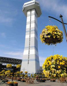 展望タワー周辺を飾る「空中花壇」のパンジー=海津市海津町の国営木曽三川公園センターで