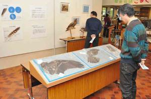 さまざまな野鳥の羽やはく製が並ぶ会場=大町市の市立大町山岳博物館で