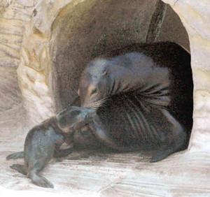 アイ(右)に甘える赤ちゃん=名古屋市千種区の東山動物園で