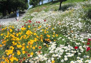 色とりどりの花が咲き誇るサイクリング道=大垣市大島町で