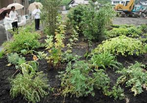 薬草研究のほか観光にも一役買おうと整備された薬草園。今後5年ほどの間に230種の薬草などを植えていく予定という=木曽町三岳で