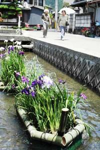 美しいハナショウブを載せた花いかだを眺める人たち=名張市の城下川で