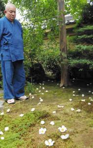 落ちて地面に広がるナツツバキの花=伊賀市上野農人町の妙華寺で