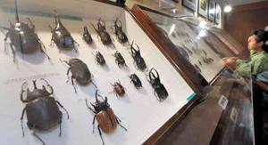 名古屋城などで観察された昆虫標本が楽しめる会場=名古屋城で