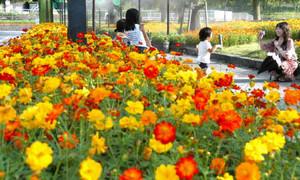 見ごろを迎えたキバナコスモスと写真を撮る来場者たち=海津市の木曽三川公園センターで