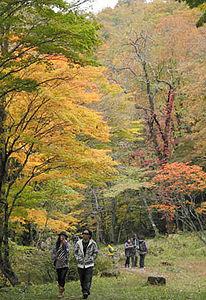 紅葉の下で散策を楽しむ観光客ら=高山市清見町で