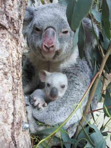 母親のティアラと赤ちゃん(東山動物園提供)