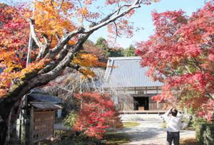 真っ赤に色付いたモミジと桃林寺=鈴鹿市小岐須町で
