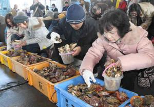 カキとヒオウギガイをバケツに詰める参加者=志摩市大王町の波切漁港で
