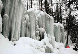 森の中に姿を現した巨大な氷柱の壁=王滝村で