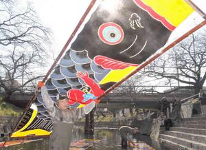 鮮やかに染めたこいのぼりを洗い、川から引き上げる職人たち=17日、愛知県岩倉市の五条川で