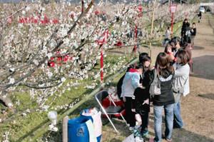 満開の梅の木のそばで会話を楽しむ家族連れ=甲良町呉竹の梅林公園で