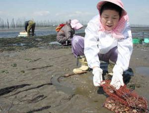 解禁日に早速潮干狩りを楽しむ来場者たち=美浜町奥田の奥田北潮干狩り場で