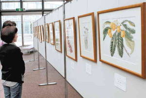 四季折々の植物画が展示されている会場=県中央植物園で