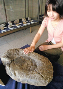 手で触ることもできるアンモナイトの化石=滑川市博物館で