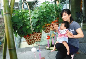 橙に色づいた旬のホオズキを楽しむ親子=浜松市西区舘山寺町の「さざなみ館」で