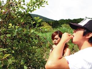 熟したブルーベリーの実を選んで口にいれる観光客ら=河津町で