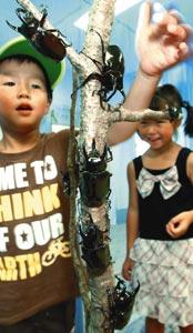 カブトムシに触れて楽しむ子どもたち=3日、浜松市西区のはままつフラワーパークで(川戸賢一撮影)