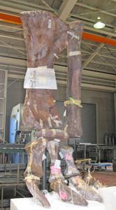 23日から展示される「タンバヨサウルス・ホフェッティ」の後肢(県立恐竜博物館提供)