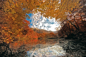 朝日を浴びて、最後の輝きを放つ刈込池の紅葉=大野市上打波で