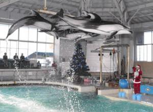 サンタクロース姿の飼育員の合図で高いジャンプを披露するイルカ=のとじま水族館で