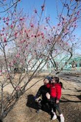 枝先にかわいらしいピンクの花を咲かせた紅梅=静岡市清水区の日本平山頂梅園で