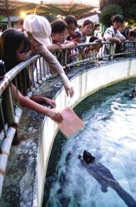 かわいいアメリカビーバーに大喜びの来場者=浜松市動物園で