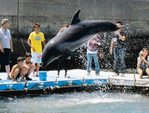 日間賀島に滞在しているイルカ=南知多町日間賀島で