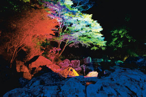 試験点灯で赤色や青色などにライトアップされた霊蛇滝周辺の木々=名張市の赤目四十八滝で