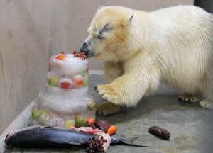 氷のケーキや果物を食べるバニラ=静岡市駿河区の日本平動物園で