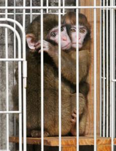 一般公開が始まり、日光浴をするニホンザルの赤ちゃん=名古屋市千種区の東山動物園で