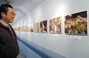魚津市の自然を紹介する写真展=魚津埋没林博物館で