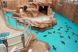 南米の海に似せてリニューアルしたプールを泳ぐペンギン=東山動物園で