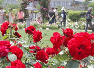 鮮やかに咲き乱れる大輪のバラ=大津市のびわ湖大津館で